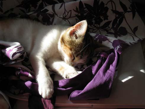 schoonheidsslaapj