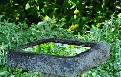 stockvault-bird-bath124158