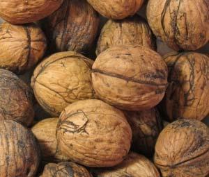 F_Nuts